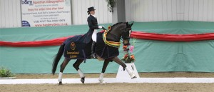Dressage Performance