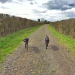 circular-bedfordshire-walk